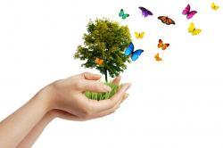 mains-arbre-et-papillons-12301811.jpg